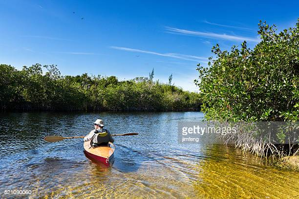 canoe trip - mangrove tree stock pictures, royalty-free photos & images