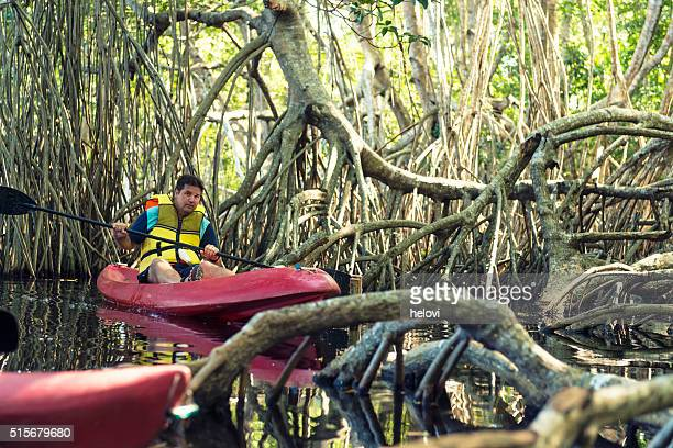 canoeing in mangrove lagoon - mangrove tree stock pictures, royalty-free photos & images