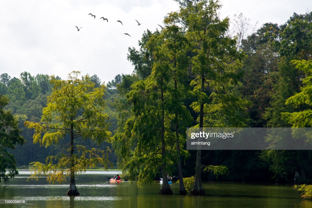 Canoeing in Summer at Trap Pond State Park : Stock Photo