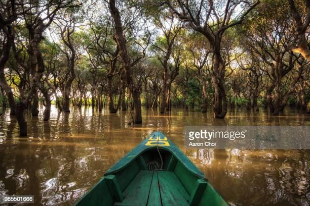 Canoeing through a Mangrove Forest