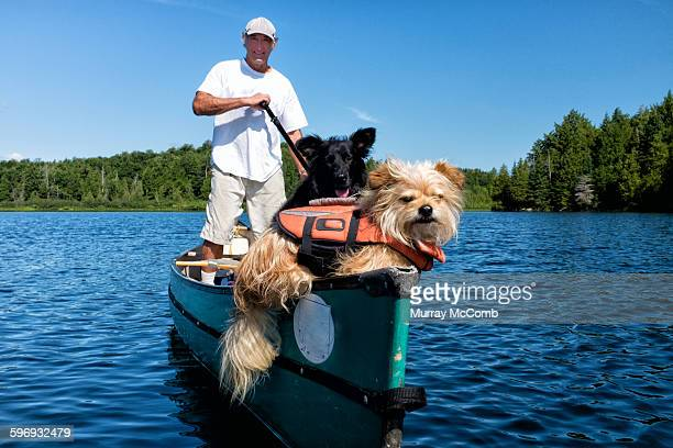 A canoeist and dogs enjoying a paddle