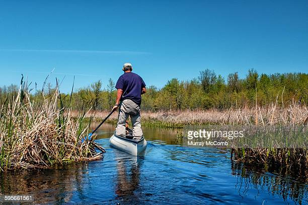 Canoeist standing up to paddle through marsh