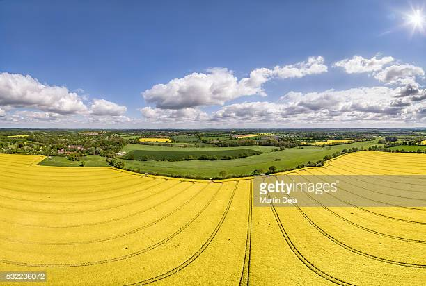 Canola Field Aerial View Panorama HDR