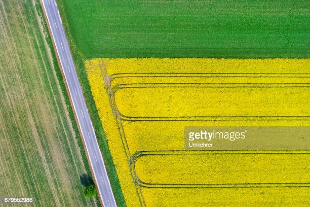 canola field from above - harvest festival stock pictures, royalty-free photos & images