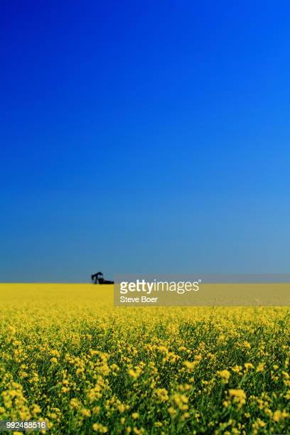 Canola Field Oil Pump 2