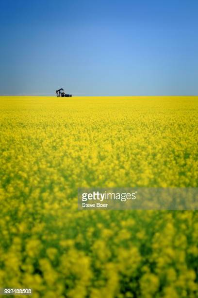 Canola Field Oil Pump 3