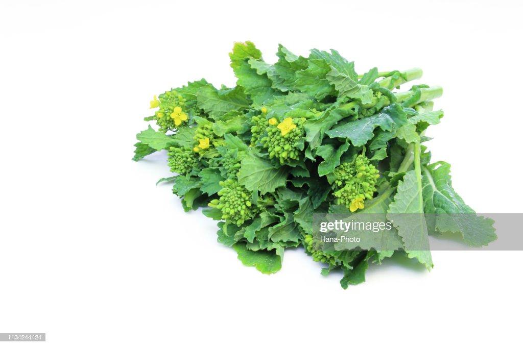 canola flower : Stock Photo