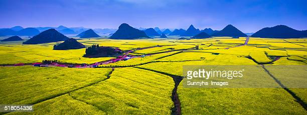 canola flowers - provinz yunnan stock-fotos und bilder