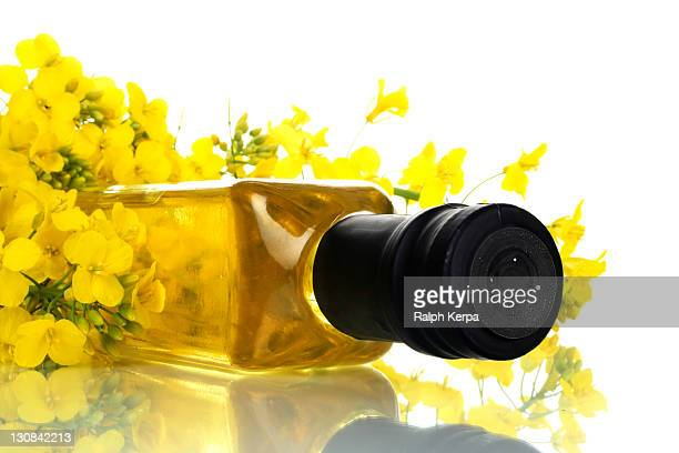canola oil - canola oil stock pictures, royalty-free photos & images