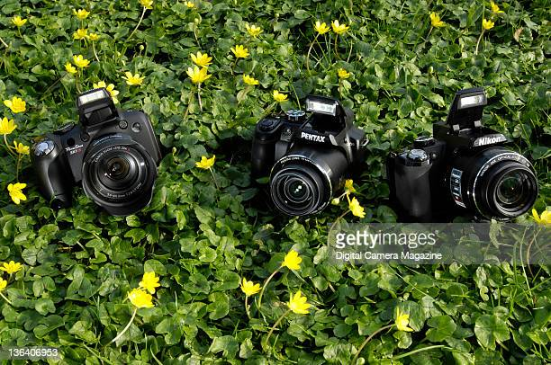 41 Clover Patch Pictures, Photos & Images - Getty Images