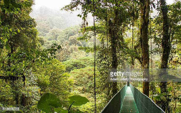 Canopy Bridge over the Monteverde Cloud Forest