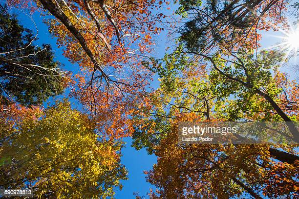 Canopy of colourful trees