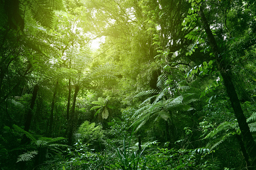 Canopy of jungle 1045035862