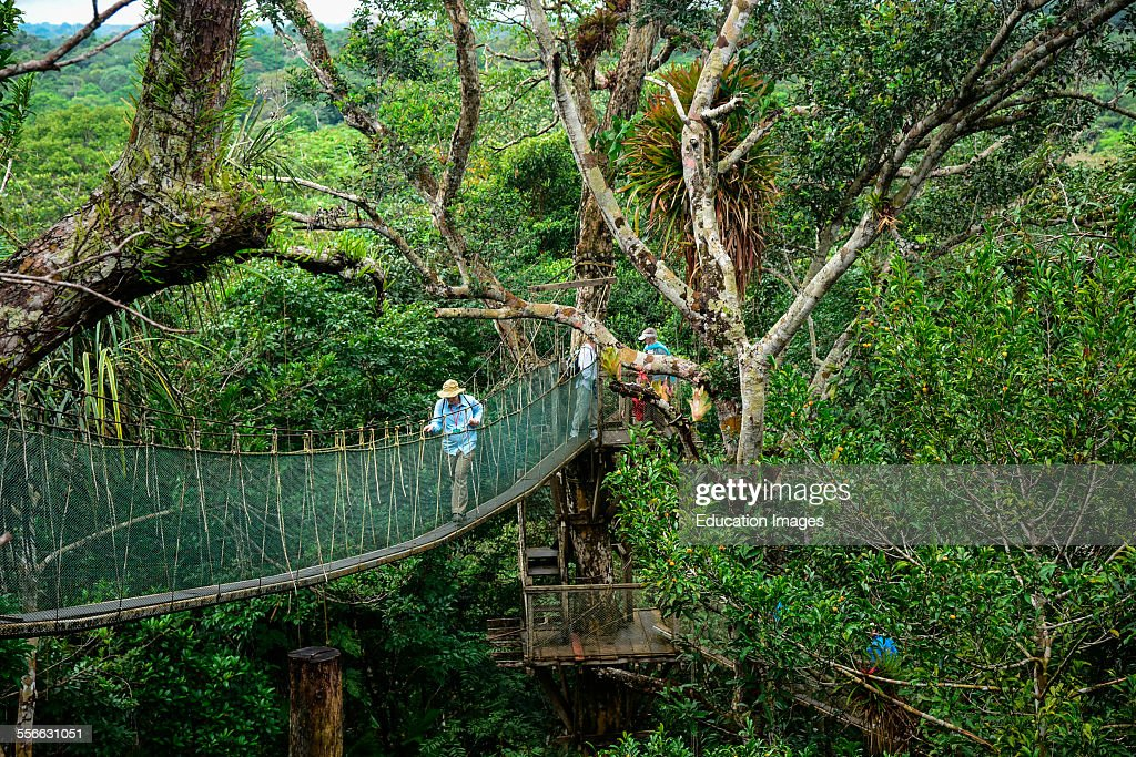 Canopy walk suspension bridge high above the jungle floor Peru. & Canopy walk suspension bridge high above the jungle floor Peru ...