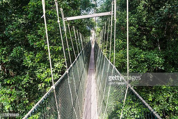 canopy walkway at taman negara national park - taman negara national park stock photos and pictures