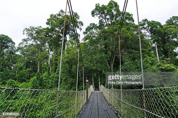 canopy walkway in danum valley rain forest, sabah borneo. - nature reserve stock pictures, royalty-free photos & images