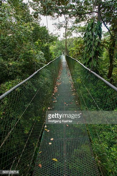 A canopy walkway in the rain forest at the Tirimbina Biological Reserve near Virgen de Sarapiqui in Costa Rica