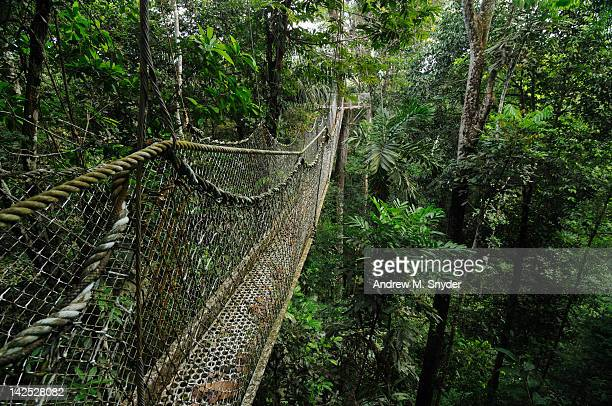 canopy walkway - guyana stock pictures, royalty-free photos & images