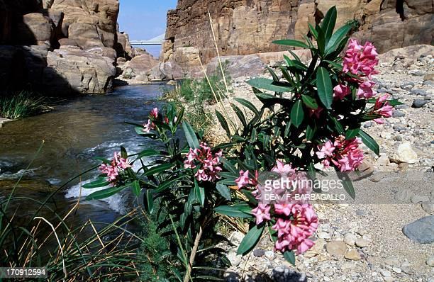 Canyon in Wadi Al Mujib Mujib Biosphere Reserve Jordan