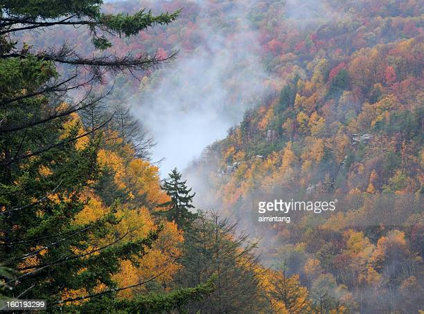 canyon of blackwater river - monongahela national forest stock photos and pictures
