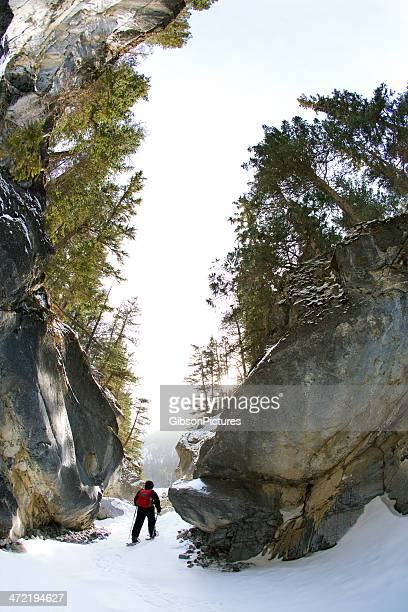 canyon snowshoe - kananaskis country stock pictures, royalty-free photos & images