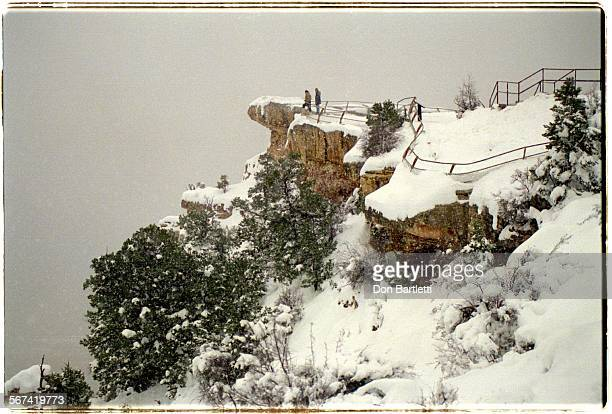 LSCanyon3DB1/13/95GrandCanyonAZ Mather Point with pinon and juniper trees cloaked in a mantle of new snow The limestone caprock on the South Rim...