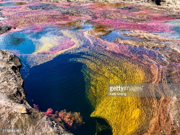 caño cristales, river is five colours - caño cristales river stock pictures, royalty-free photos & images