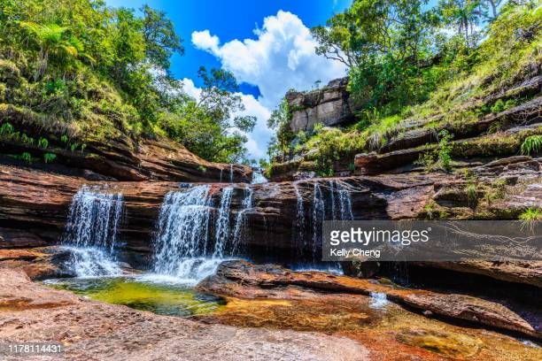 caño cristales, river of five colors - caño cristales river stock pictures, royalty-free photos & images