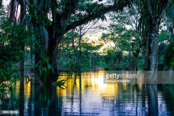 caño negro wildlife refuge, costa rica - wildlife reserve stock photos and pictures