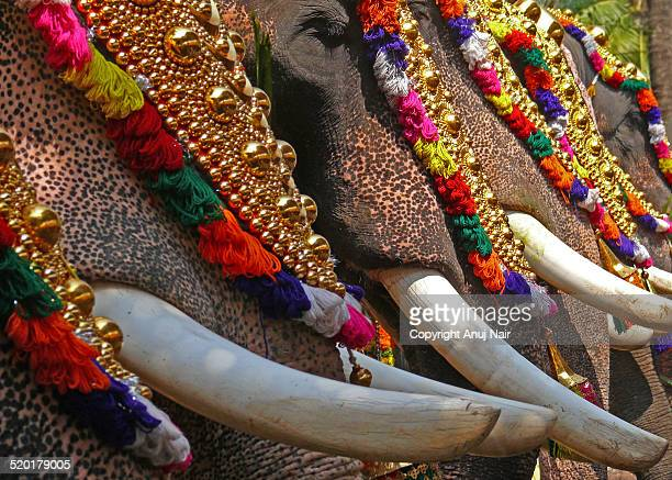 caparisoned tuskers - kerala elephants stock pictures, royalty-free photos & images