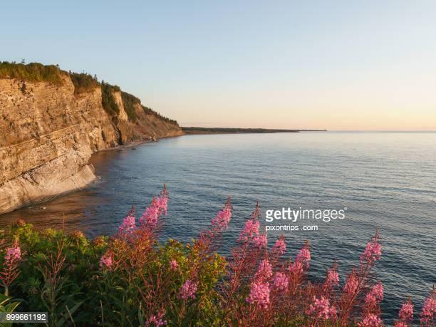 cap-bon-ami of forillon national park, canada - forillon national park stock pictures, royalty-free photos & images