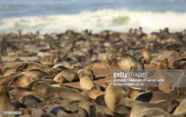 Cape Cross Seal Reserve, Skeleton Coast, Namibia, Africa