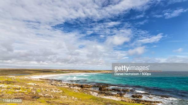 cape dolphin - フォークランド諸島 ストックフォトと画像