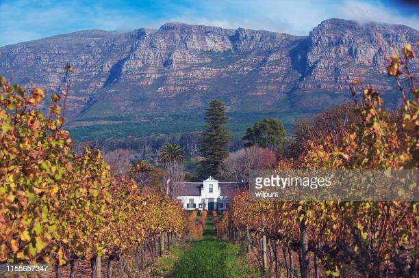 cape dutch homestead and wine estate wide view in vineyards - south africa stock pictures, royalty-free photos & images