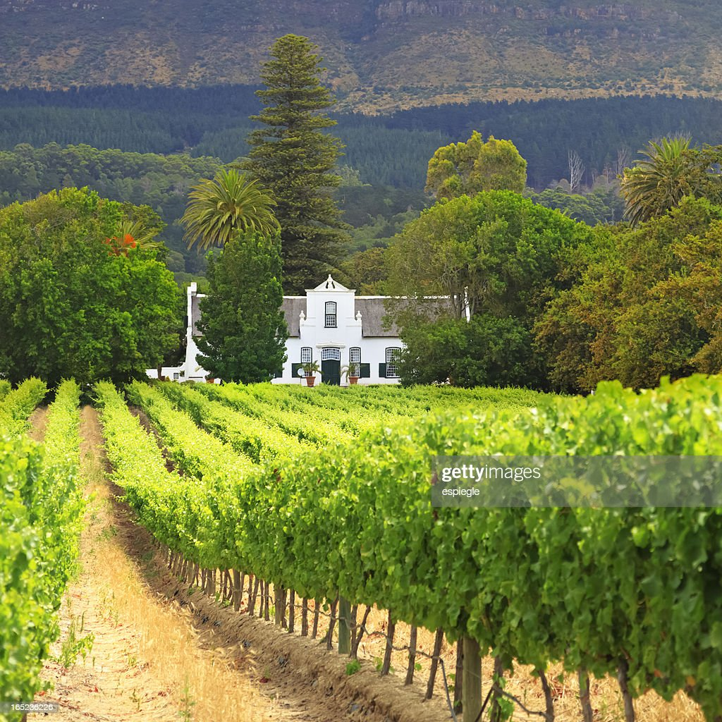 Cape Dutch Manor House and Vineyard, South Africa : Stock Photo