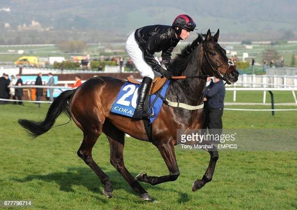 Cape Dutch ridden by jockey Jack Quinlan going to post prior to the Coral Cup on Ladies Day during the Cheltenham Festival