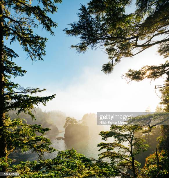 cape flattery *new blog post, link below* - cape flattery stock photos and pictures