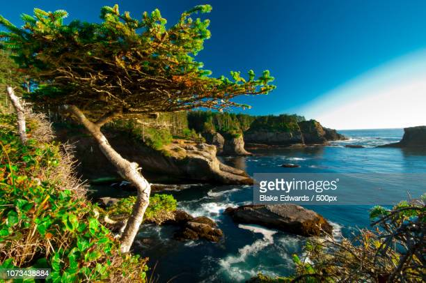 cape flattery - cape flattery stock photos and pictures