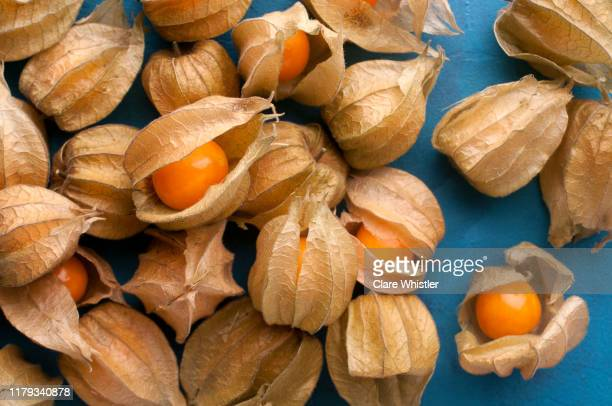 cape gooseberry (physalis) loose on blue painted textured background - ホオズキ ストックフォトと画像