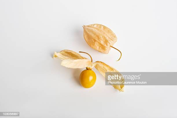 cape gooseberry (physalis peruviana) - chinese lantern stock pictures, royalty-free photos & images
