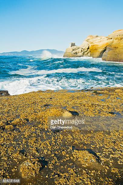 cape kiwanda and the pacific ocean - dan sherwood photography stock pictures, royalty-free photos & images
