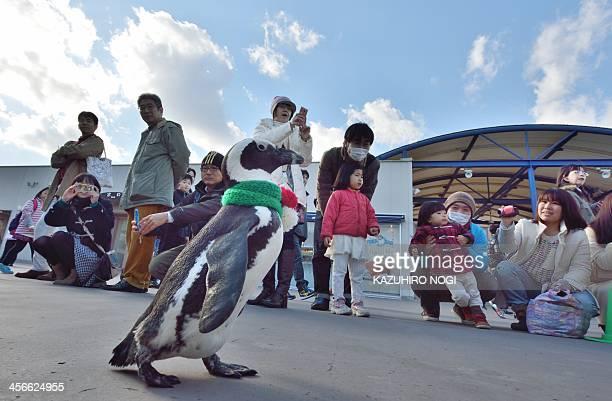 A cape penguin dressed in Christmas themed costumes takes part in a Christmas event at the Hakkeijima Sea Paradise aquarium in Yokohama suburban...