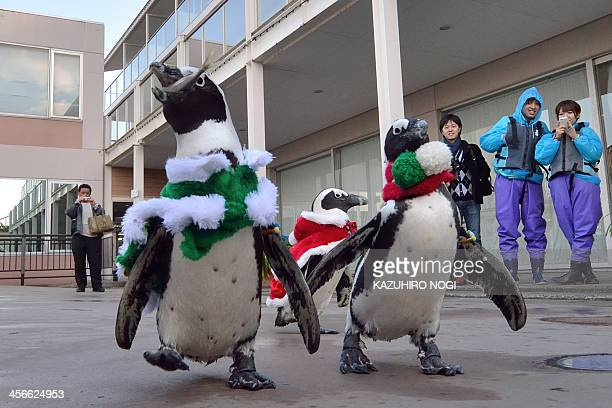 Cape penguins dressed in Christmas themed costumes take part in a Christmas event at the Hakkeijima Sea Paradise aquarium in Yokohama suburban Tokyo...