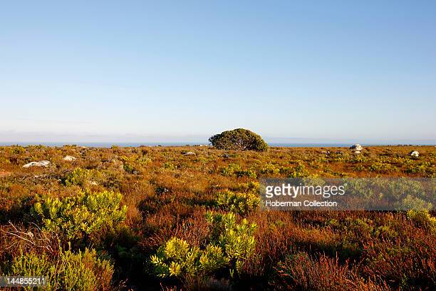Cape Peninsula National Park Cape of Good Hope