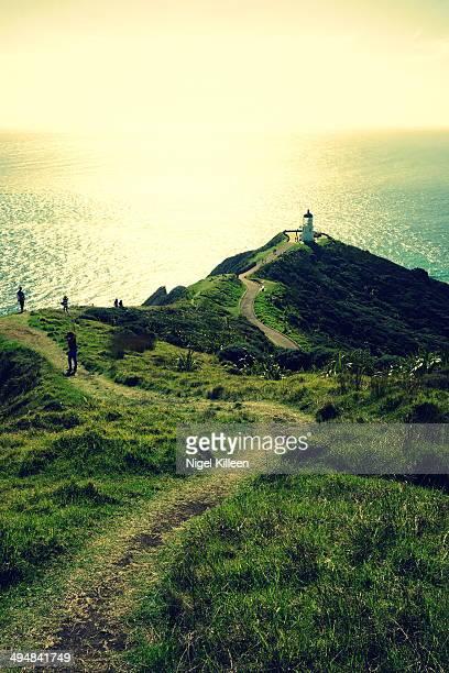 Cape Reinga Northland New Zealand