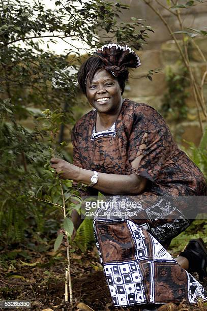 Kenyan Nobel peace prize winner Professor Wangari Maathai holds 21 July 2005 a tree that she planted in the Newlands forest during her visit to an...