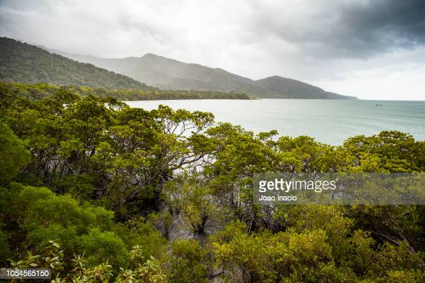 cape tribulation beach, far north queensland, australia - townsville queensland stock pictures, royalty-free photos & images