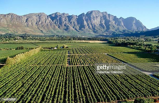 Cape Wine Route Franschhoek Western Cape
