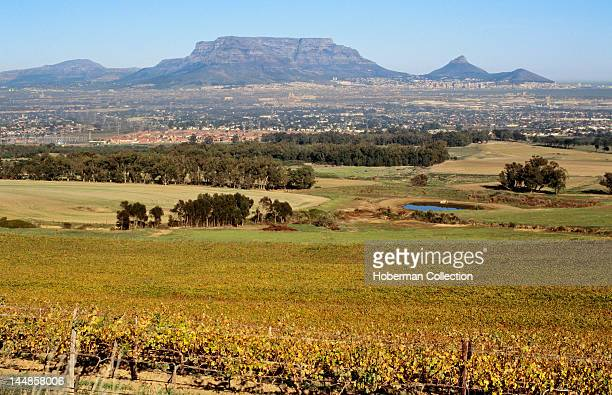 Cape Wine Route with view of Table mountain, Noordhoek, Western Cape
