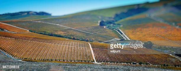 cape winelands autumn panoramic scene tilt-shift effect - western cape province stock pictures, royalty-free photos & images